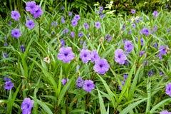 Violet delphinium flower Stock Photography