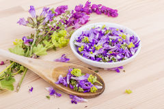 Violet, edible flowers Stock Photography