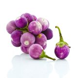 Violet eggplant Royalty Free Stock Images