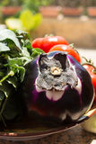 Violet eggplant ball with broccoli and red tomatoes, fresh healt Royalty Free Stock Photos