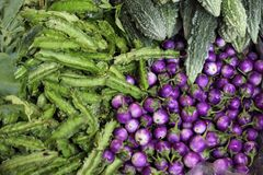 Violet eggplant and karela Stock Photos
