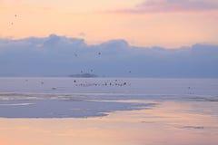 Violet evening on the freezing sea. Early winter, freezing sea, sunset Royalty Free Stock Image
