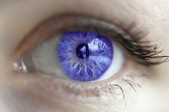 Violet eye color. Women blue-violet eye color changed with lenses royalty free stock photo
