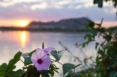 violet för morgon för härlighet för bakgrundsfärgblomma naturlig Arkivfoto