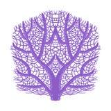 Violet Fan Coral, icône tropicale de Marine Invertebrate Animal Isolated Vector de récif Photos libres de droits