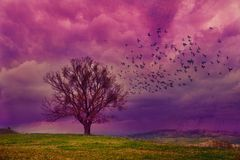 Violet fantasy. Grunge fantasy landscape with birds flying towards a lone tree. Surrealist illustration