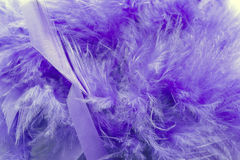 Violet feathers Stock Photo