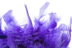 Violet feathers Stock Image