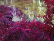 Violet Ferns At Waters Edge Stock Images