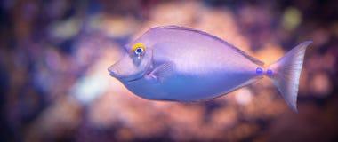 Violet fish artwork Stock Images