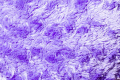 Violet fleece wool Stock Photo