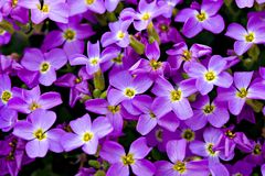 Violet Floral Background. A background of violet flowers Stock Photo