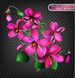 Violet Floral-de achtergrond is op een transparante achtergrond Royalty-vrije Stock Fotografie