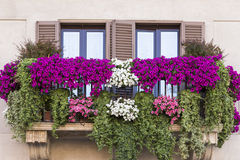 Violet floral pot on balcony Rome. Italy Stock Photography