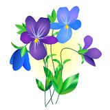 Violet flower. A little posy of violet flowers Royalty Free Stock Photography