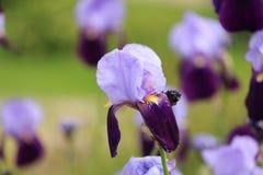 Free Violet Flower Stock Image - 41071181