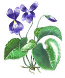 Violet flower. Hand-made illustration of a violet flower Royalty Free Stock Photography