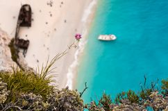 Violet flower above a steep cliff with rusty shipwreck Stock Photo
