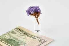 Violet flower in ampoule with medicine and 50 USA dollars banknote stock photography