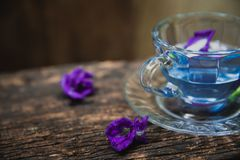 Violet flower Asian pigeonwings or Butterfly Pea Heabal hot drinking tea Stock Images