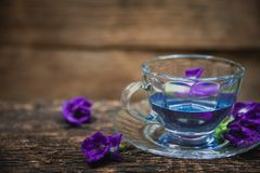 Violet flower Asian pigeonwings or Butterfly Pea Heabal hot drinking tea Royalty Free Stock Images