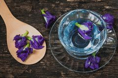 Violet flower Asian pigeonwings or Butterfly Pea Heabal hot drinking tea Stock Photos