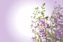 Violet flower background Royalty Free Stock Photo