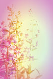 Violet flower background Stock Photo