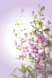 Violet flower background Royalty Free Stock Photos