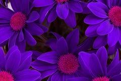 Violet flower background stock photography
