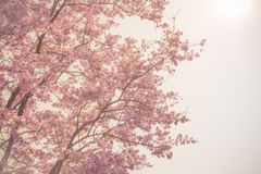 Violet flower branches soft focus Royalty Free Stock Photography