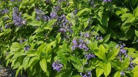 Violet flower bundles in green flower bed. Random pattern Royalty Free Stock Image