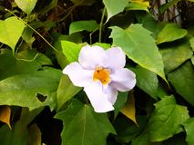 Violet Flower Closeup Stock Image