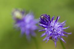 Violet flower closeup Stock Photo