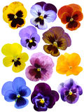 Violet flower collection. Isolated on white background stock images