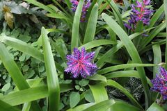 Violet Flower en fleur photos stock