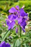 Violet Flower, Flowers, Flower Royalty Free Stock Photos