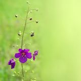 Violet flower on green Stock Images