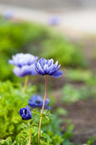 Violet flower on green blured background Royalty Free Stock Photos