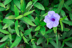 Violet flower. Green plant nature Stock Photos