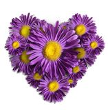 Violet flower heart royalty free stock photography
