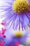 Violet Flower i ett hav av färger Arkivbild