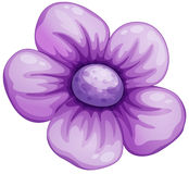 A violet flower Stock Photos