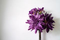 Violet flower in jar on white background. stock photography