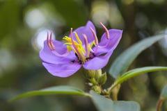 Violet Flower met mieren Stock Foto