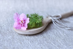 Violet flower with a moss Stock Photography