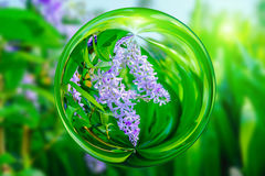 Violet flower of Petrea Flowers  in glass ball effect  with blurred green background Royalty Free Stock Image