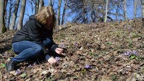 Violet flower pick stock video footage
