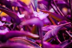 Violet flower on plant background. Violet flower on violet plant background Stock Image
