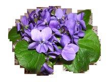 Violet, Flower, Plant, Flowering Plant Stock Image